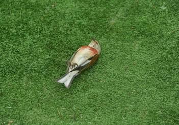 Más de 300 aves muertas tras colisionar con pistas de pádel